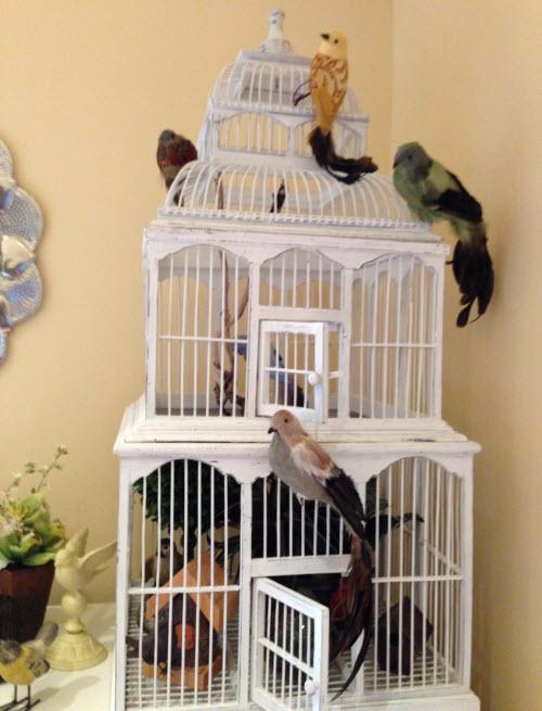 Cynthia's Bird Cage